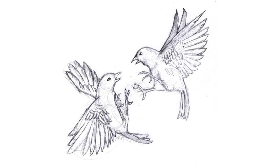 dessin d'oiseaux qui se battent